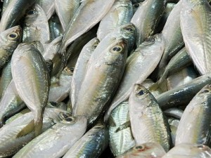 Fish, rich in Omega-3 Oil