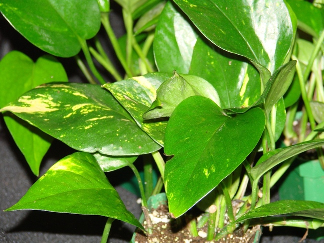 Air Purifying Indoor Plants Health And Fitness
