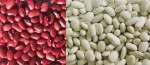 Kidney Beans Red and White
