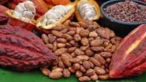 Cocoa Flavanol